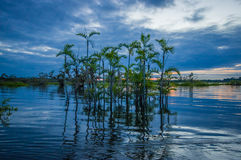Sunset silhouetting a flooded jungle and some aquatic plants in Laguna Grande, in the Cuyabeno Wildlife Reserve, Amazon Stock Image
