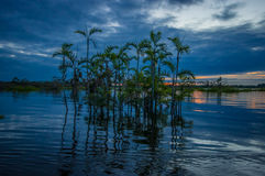 Sunset silhouetting a flooded jungle and some aquatic plants in Laguna Grande, in the Cuyabeno Wildlife Reserve, Amazon Stock Photography