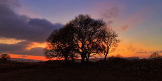 Sunset silhouetting trees Brecon Beacon National Park Royalty Free Stock Image