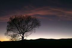 Sunset silhoutte. Lonely tree silhouette after sunset Stock Photography