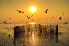 Sunset with silhoutte of birds flying royalty free stock images