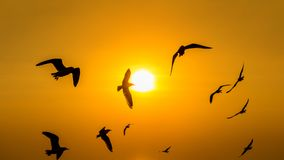 Sunset with silhoutte of birds flying royalty free stock image