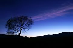 Sunset silhoutte in blue. Lonely tree silhouette against dark blue sky after sunset Stock Photo