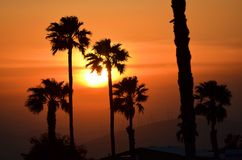 Sunset sillouetted palm trees Royalty Free Stock Images