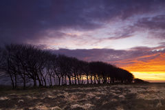 Sunset Silouette. Of a Exmoor Treeline stock images