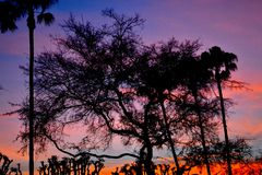 Sunset in silouette. Shadowy tree lined sky at sunset Stock Photo