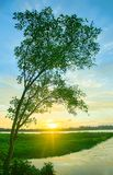 Sunset with single tree in the river royalty free stock photo