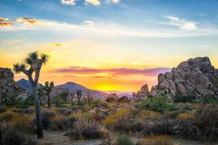 Sunset skies at Joshua Tree National Park in Joshua Tree, California. Colorful skies of sunset glow over the desert with Joshua Trees, boulders and mountains are royalty free stock photography