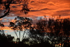 Sunset Sky In Australia. Colourful golden sunset sky and moody wispy clouds overlooking the silhouetted desert trees and shrubs and landscape Royalty Free Stock Photography