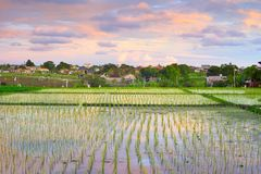 Sunset sky Bali rice fields. Scenic sunset sky over rice fields terraces, rural landscape with small village in background, Bali, Indonesia stock photos