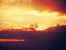 Sunset sky. Sunset and birds Royalty Free Stock Images