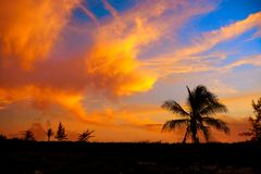 Sunset sky coconut palm trees in Caribbean. Sunset orange sky coconut palm trees in Caribbean Riviera Maya Royalty Free Stock Photography