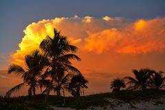 Sunset sky coconut palm trees in Caribbean. Sunset orange sky coconut palm trees in Caribbean Riviera Maya Stock Photography
