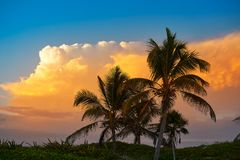 Sunset sky coconut palm trees in Caribbean. Sunset orange sky coconut palm trees in Caribbean Riviera Maya Royalty Free Stock Image