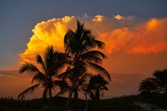Sunset sky coconut palm trees in Caribbean. Sunset orange sky coconut palm trees in Caribbean Riviera Maya Stock Photos