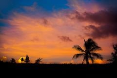 Sunset sky coconut palm trees in Caribbean. Sunset orange sky coconut palm trees in Caribbean Riviera Maya Royalty Free Stock Photos