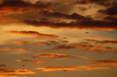 Sunset sky colors Royalty Free Stock Photography