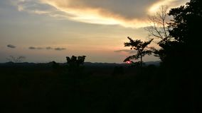 Sunset sky in evening time at rubber tree plantation with silhouette of tree at Khao Chamao Rayong, Timelapse stock video