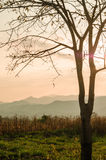 Sunset sky in the natural scenery, meadows and trees Stock Photography
