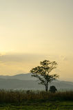 Sunset sky in the natural scenery, meadows and trees Royalty Free Stock Photography