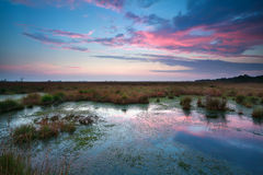 Sunset sky over bog Royalty Free Stock Images