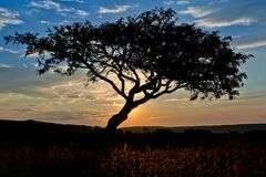 Sunset sky over a hilltop in The Drakensberg South Africa. With a tree against the sky Stock Image