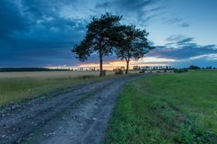 Sunset sky over old pine trees and countryside Royalty Free Stock Photo