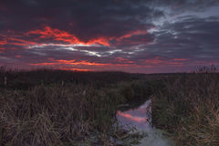 Sunset sky over the swamps Royalty Free Stock Image
