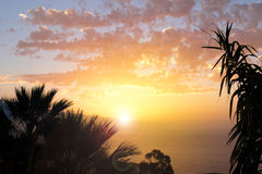 Sunset sky over water with palm tree silhouette Stock Photos