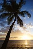 Sunset sky with palm tree. royalty free stock photography