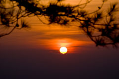 Sunset sky at Phukradueng National Park. With silhouette blurred of Pine tree branches in foreground stock photography