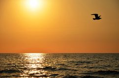 Sunset sky with seagull Stock Images