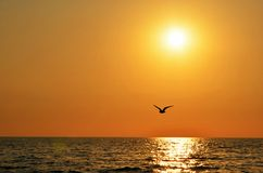 Sunset sky with seagull Royalty Free Stock Images