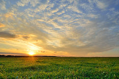 Sunset sky and sun over the green field. Sun and bright green field under a colorful sunset sky Royalty Free Stock Photography