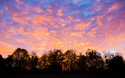 Sunset sky and trees Stock Photography