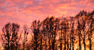 Sunset sky and trees Royalty Free Stock Photography