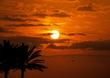 Sunset sky tropical palm trees royalty free stock photography