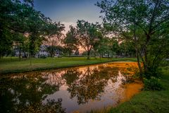 Sunset sky and yellow petals of Padauk flowers covering the pond at Phutthamonthon public park,Nakhon Pathom Province,Thailand. Pterocarpus macrocarpus,or the Royalty Free Stock Image