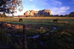 Sunset at Smith Rock St. Park. Horses grazing in a pasture with Smith Rock State park in the back ground Stock Photos