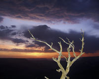 Sunset Snag, Grand Canyon National Park. A snag or dead tree with an interesting shape is backed by a colorful and stormy sky at sunset Royalty Free Stock Photo