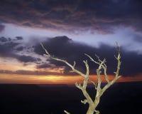 Sunset Snag, Grand Canyon National Park Royalty Free Stock Photo