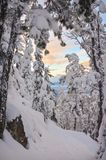 Sunset through snow covered trees in winter Stock Images