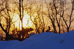 Sunset on snow field. The sunlight fell aslant the surface of mountain through some branches Stock Photography