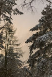 Sunset in a snowy Forest stock images