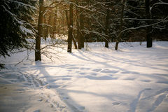 Sunset in snowy forest Royalty Free Stock Photos