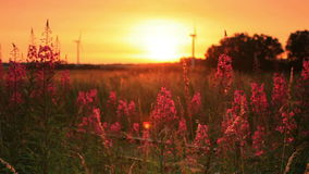 Sunset through some flowers. Video of sunset through some flowers stock video footage