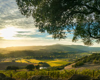 Sunset at Sonoma California patchwork vineyard at harvest Royalty Free Stock Photo