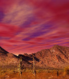 Sunset Sonora Desert. In central Arizona USA Stock Photography