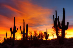 Sunset. Sonoran Desert at sunset, in Arizona royalty free stock images