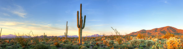 Sunset. Sonoran Desert catching days last rays royalty free stock photography